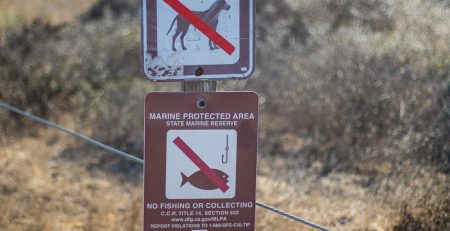 Wildlife-Involved Car Accidents